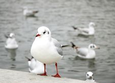 Free White Bird With Red Beak And Claws Stock Photos - 1823933