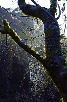 Free Cobwebs Stock Photography - 1824122