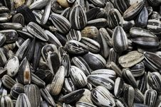 Free Sunflower Seeds Royalty Free Stock Photography - 1826057