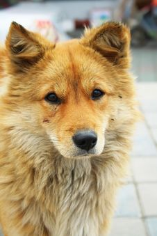 Free Dog Look At You Stock Image - 1826791