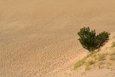 Free Single Tree In The Desert Stock Photography - 18202072