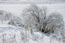 Free Frost Vegetation Stock Photography - 18202902