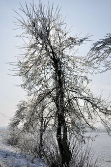 Free Frost Branches Stock Images - 18203204