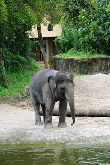 Free Mighty Elephant In Zoo Royalty Free Stock Photo - 18203275