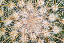 Free Cactus Royalty Free Stock Images - 18207139