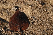 Free Brown Sandy Leaf Royalty Free Stock Photos - 18208098