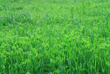 Free Green Grass Stock Images - 18213774