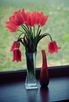 Free Tulips Royalty Free Stock Image - 18215086