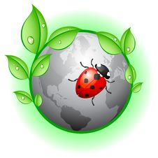 Plane Earth With Leaves And Ladybird Stock Images