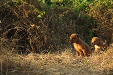Two Dogs Sitting On The Field Royalty Free Stock Photo