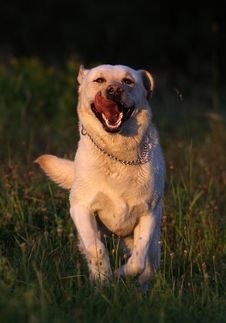Free Dog Stock Photos - 18218633
