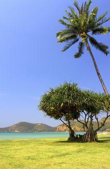 Free Palm Tree On Beach Background Royalty Free Stock Photo - 18219585