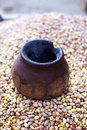 Free Peanuts Or Groundnut Roasting Traditional Way Royalty Free Stock Images - 18224789