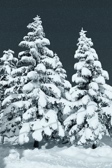 Free Icy Pine Stock Photography - 18224572
