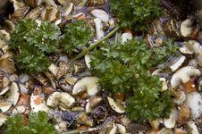Free Mushroom-Potato Soup Royalty Free Stock Images - 18225309