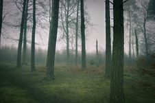 Free Foggy Woods Royalty Free Stock Photos - 18226548