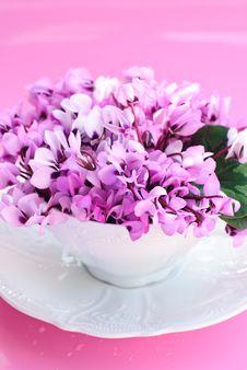Free Purple Spring Flowers Royalty Free Stock Photos - 18227398