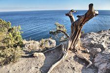 Free Dry Tree On The Seashore Stock Photos - 18228423