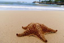 Free Starfish On The Beach Stock Images - 18228644