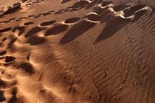 Free Animal Tracks In The Sand Royalty Free Stock Photography - 18228847