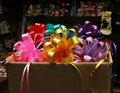 Free Bows For Gifts Royalty Free Stock Photo - 18230455