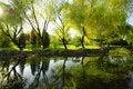 Free Reflection Garden Royalty Free Stock Photos - 18233738