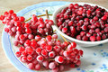 Free The Frozen Berries Royalty Free Stock Image - 18235106