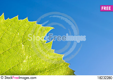 Free Part Of Grape Leaf Stock Photo - 18232280