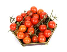 Free Cherry Tomato Royalty Free Stock Photography - 18231877