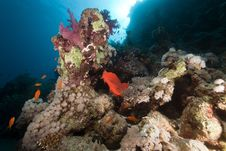 Free Fish, Coral And Sun In The Red Sea. Royalty Free Stock Photos - 18232058