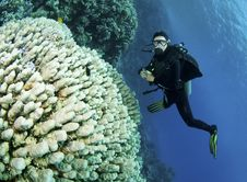 Free Scuba Divers On Coral Reef Stock Photos - 18232283