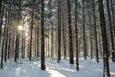 Free Forest Covered With Snow Royalty Free Stock Image - 18232376