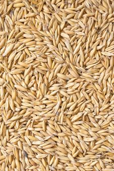 Free Grains Of Oat Royalty Free Stock Photography - 18232487