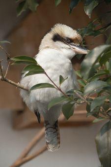 Free Lovely Bird Stock Image - 18232681