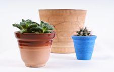 Free Assorted Houseplants Royalty Free Stock Photo - 18233875