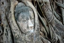 Free Head Of Ancient Buddha In Tree Royalty Free Stock Image - 18235906