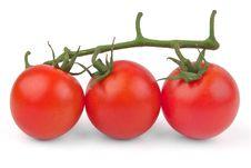 Free Fresh Red Tomatoes Stock Photo - 18236660
