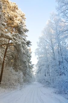 Free Winter Snow Forest - The Beginning Of Spring Stock Image - 18238781