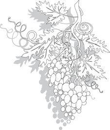 Free Grapes Royalty Free Stock Photo - 18238835