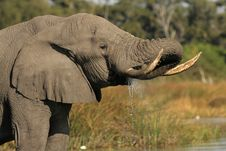 Free Elephant Stock Photography - 18238842