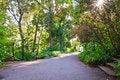 Free Walk Way With Sunbeam Royalty Free Stock Photos - 18241158