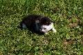 Free Small Newborn Kitten Royalty Free Stock Images - 18241879