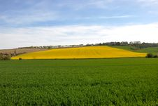 Free Cultivated Fields Royalty Free Stock Photos - 18240338