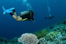 Scuba Divers And Coral Royalty Free Stock Photo
