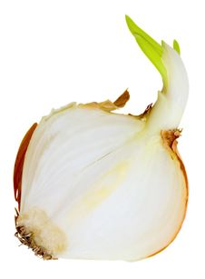 Free Onion Spring Half Royalty Free Stock Image - 18240746