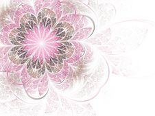 Gentle And Sweet Pink Fractal Flower Stock Images