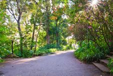 Free Walk Way With Sunbeam Royalty Free Stock Photos - 18241158
