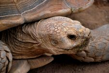 Free Tortoise Closeup Stock Image - 18241491