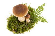 Free Two Boletus Mushrooms Royalty Free Stock Photography - 18243237