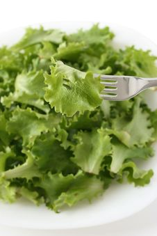 Free Salad On A Fork Stock Image - 18244001